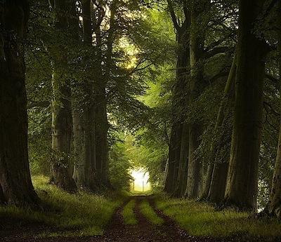 peaceful-path