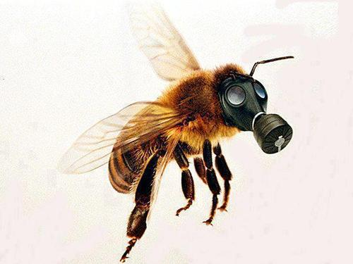 GAS-MASKED BEE