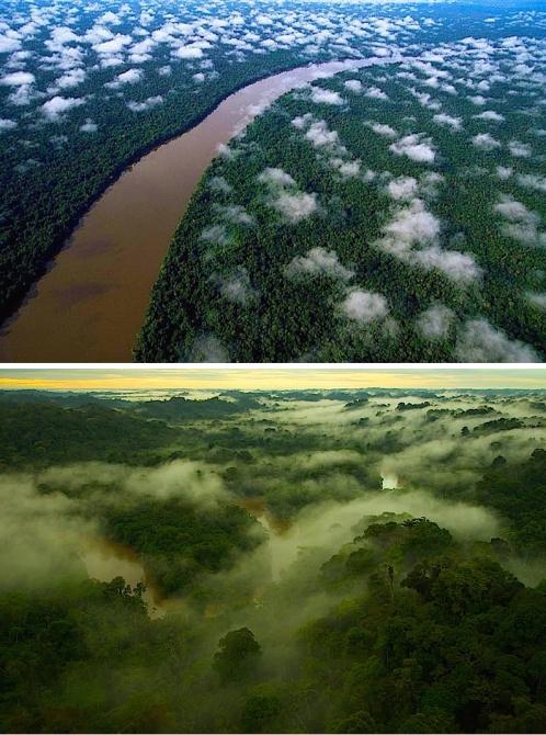 Yasuni_National_Park_Aerial_Tiputini
